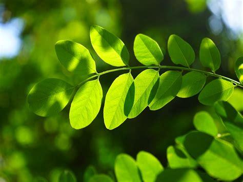 Las plantas no tienen ni una hoja de tontas