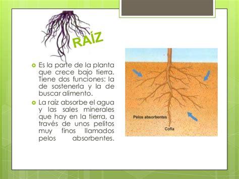 Las plantas para primaria