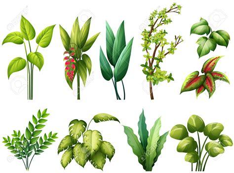 Las plantas: tipos según sus hojas. | MI PRIMARIA EN UN BLOG