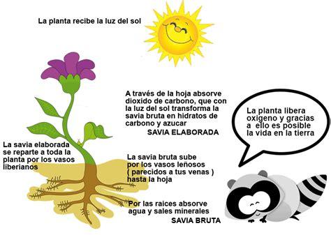 Las plantas :: Todo sobre Las plantas para niños
