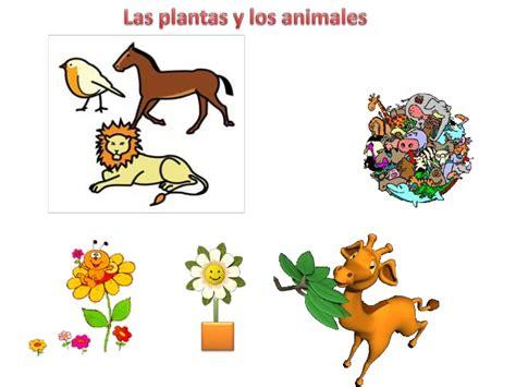 Las plantas y animales