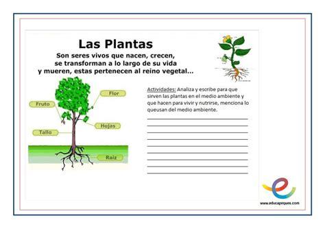 Las plantas y sus partes. ¿Cuál es la función principal de ...