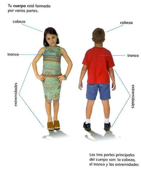 Las principales partes del cuerpo humano