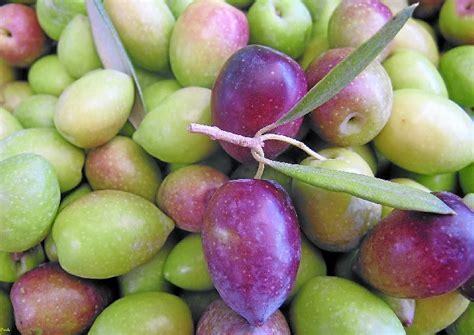 » Las variedades de la aceituna, diferentes sabores para ...