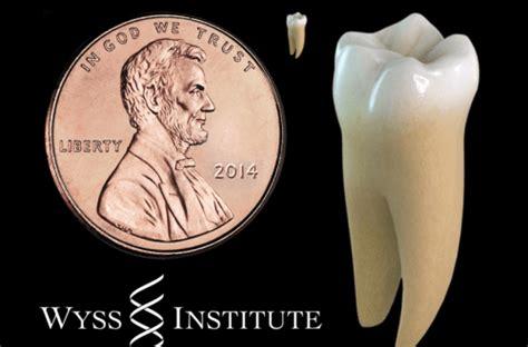 Láser y células madre para hacer crecer los dientes ...