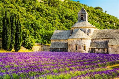 Lavender Fields in Provence - Visit the Gorgeous South of ...