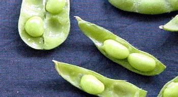 Legumbres - Alimentos - Canal Nutrición - Dietas.NET ...