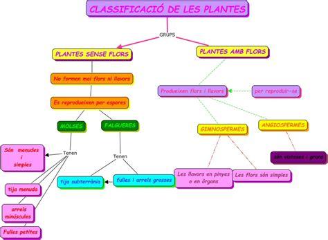 Les Classes de Cinquè | Escola Ramón y Cajal de Terrassa