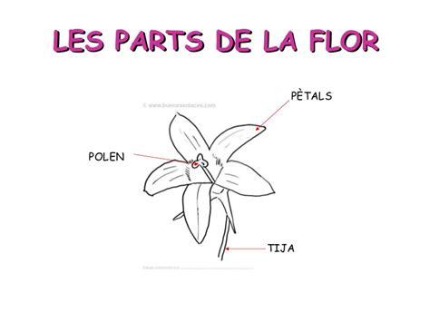 Les flors i les abelles