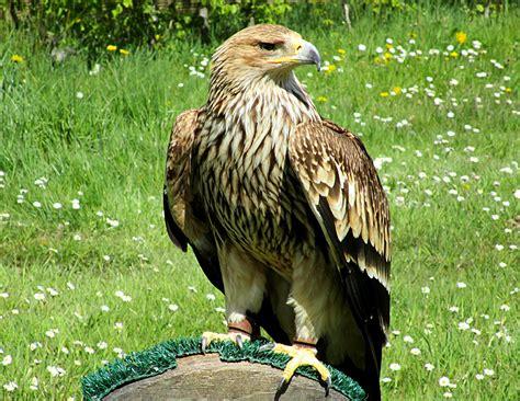 Les oiseaux Rapaces du Parc de Rambouillet