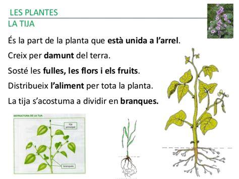 Les plantes 2015