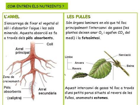 les plantes - Buscar con Google   naturales   Pinterest ...