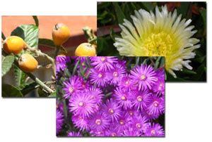 Les plantes del pati - Didactalia: material educativo