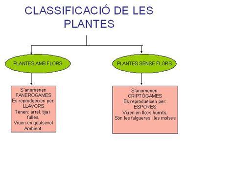 LES PLANTES I ELS FONGS on emaze