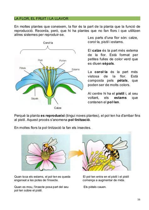 les plantes  parts, cicle de la vida...
