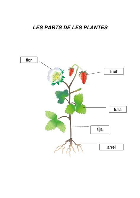 Les plantes, parts.