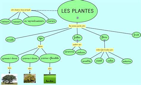 Les plantes presentació