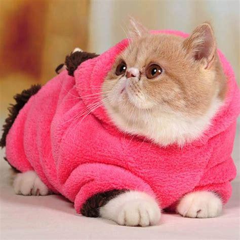Lindos Gatos Con Ropa En Imagen