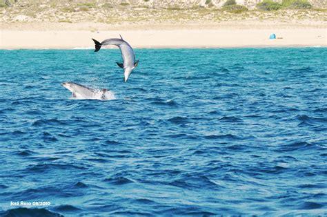 Lisboa -Setúbal -Troia: El Ferry de los delfines