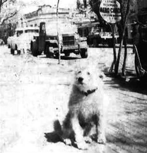 Lista: Los perros más famosos de la historia