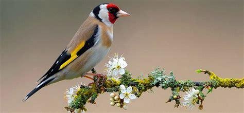 Listado de aves :: Imágenes y fotos