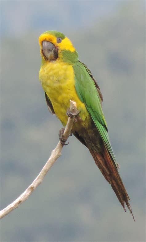 Listado de las Aves de Colombia | ::. Proaves .:: | Proaves