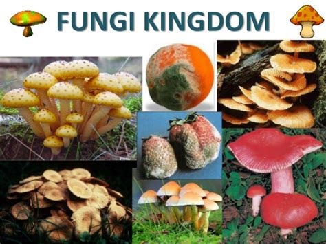 Living things: Kingdoms