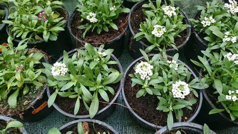 Llega la primavera: plantas de exterior y tareas en el huerta