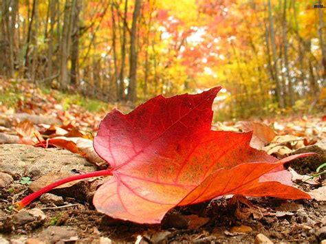 Lo que leo lo cuento: Se busca un otoño