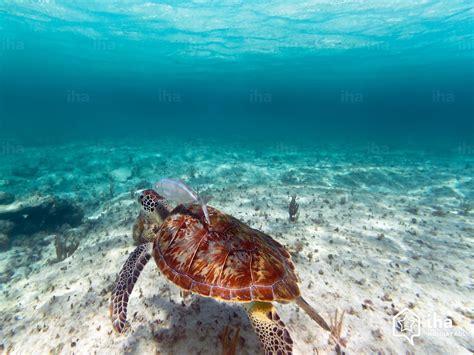 Location vacances Playa del Carmen Location – IHA particulier