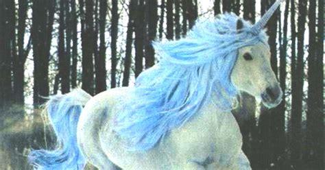 loco pero no Estupido: Unicornio Azul