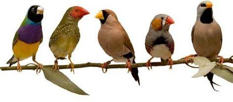 Lolo Pets Smakers Barretas para Pássaros exóticos ...