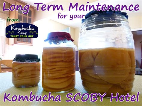 Long Term Maintenance for your SCOBY Hotel from Kombucha ...