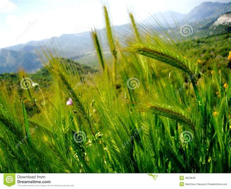 Long Wild Grass Stock Photo - Image: 4853840