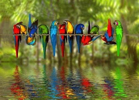 loros de colores.   Mundo Animal   Pinterest