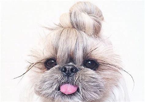 Los 10 perritos con moño que te van a enamorar | Red17
