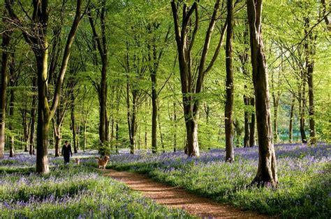 Los 13 bosques más bellos del mundo según la National ...