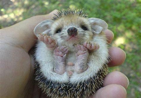 Los 17 animales bebés más tiernos: fotografías que te har ...