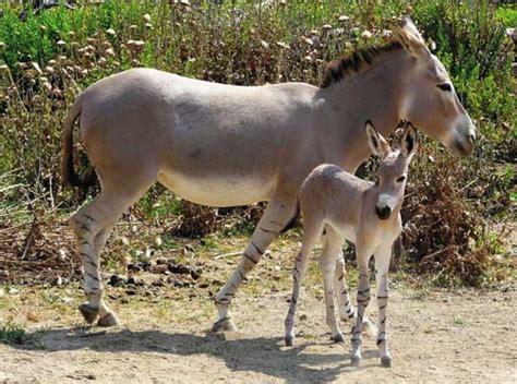 Los 5 animales en peligro de extinción de África ...