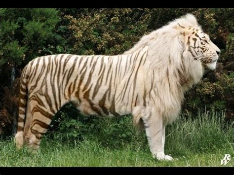 Los 5 Animales híbridos más impresionantes - YouTube
