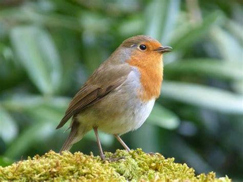 Los 5 pájaros que mejor cantan