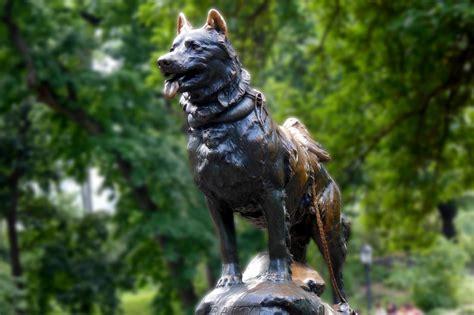 Los 5 perros más famosos de la historia - TOBY eats the world