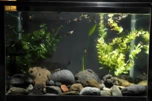 Los 8 mejores peces para tu acuario   VIX