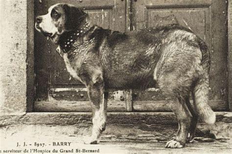 Los 8 Perros más Famosos de la Historia. Conocelos Aquí!