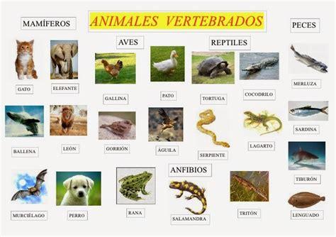 Los animales ~ Animales