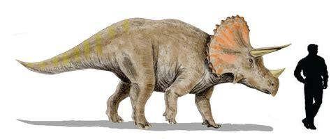 Los animales en la prehistoria: Teorías sobre la extinción ...