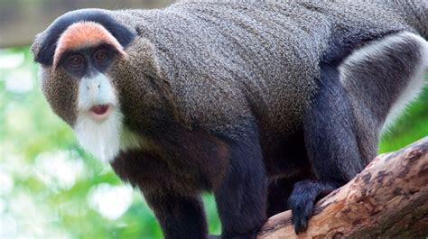 Los animales más caros del mundo