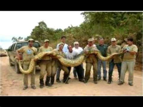 Los animales más sorprendentes del mundo. - YouTube