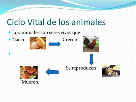 Los animales ppt