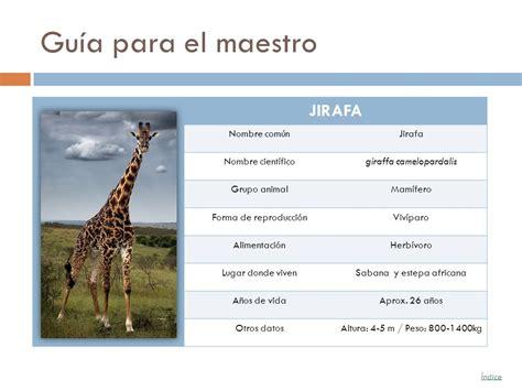 Los animales vertebrados - ppt video online descargar